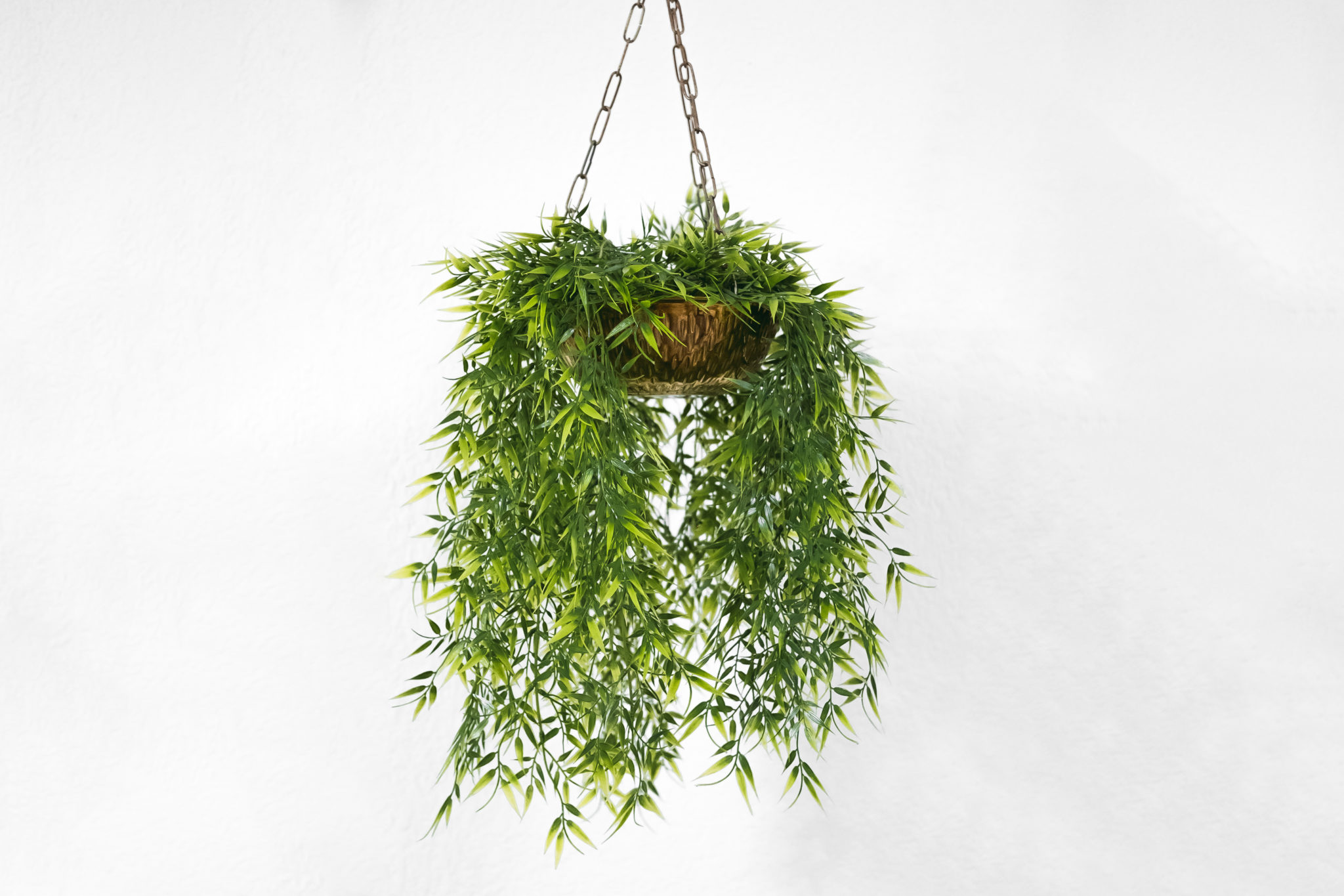 Decorate Your Home with Plants